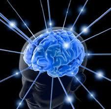 hjernen NLP